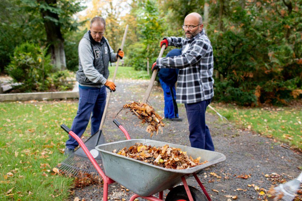 Zwei Männer im Projekt Umweltverbesser befüllen eine Schubkarre mit Laub.